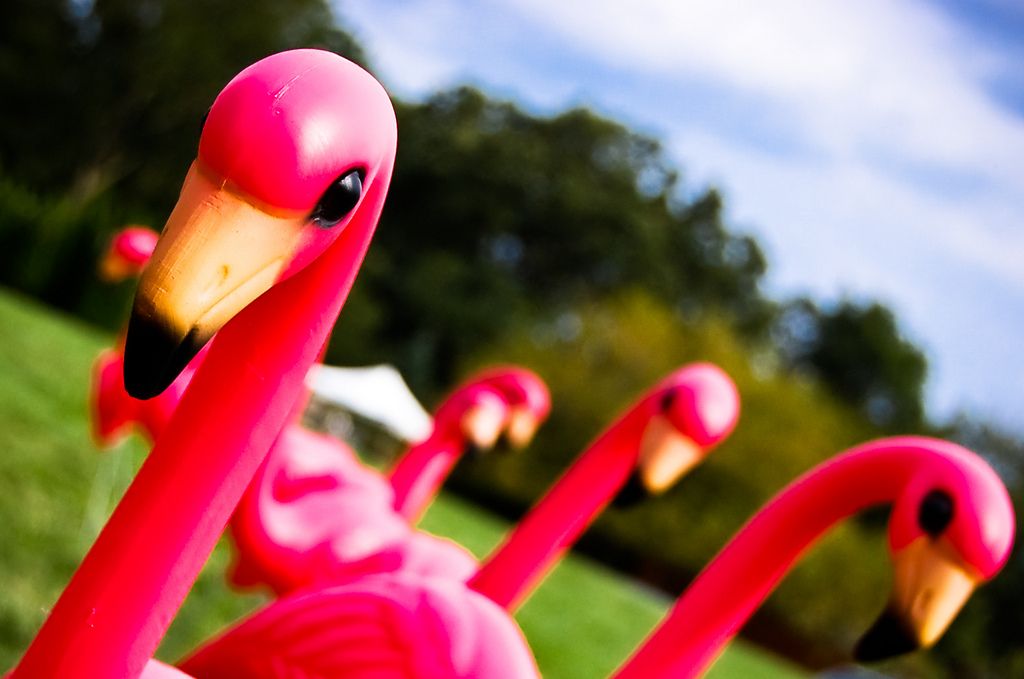 an analysis of the spring 1999 the american scholar essay the plastic pink flamingo a natural histor Get the backstory with articles and research on events surrounding politics, history and culture - past and present dive into the deep archive of us newspapers and uk newspapers , transcripts and history journals , or browse articles from political magazines , cultural magazines , and hobby and entertainment magazines.